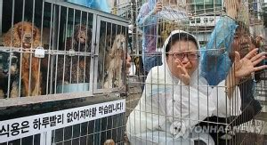 News & Articles in Korean 한글 뉴스 - Stop the Dog and Cat Consumption in S