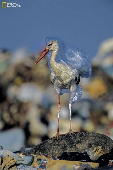 Plastic pollution: Images of a global problem in 2019 | Animals And Ocean Trash